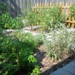 The weed barrier and mulch have kept maintenance to a minimum