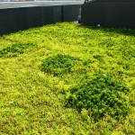 More of the green roof material