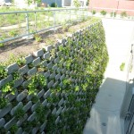 A closeup of the living wall from above