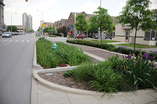 Cultural Trail Rain Garden (Photo by Casey Jo Ailes)