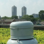 View of Downtown Indy from the Nature Conservancy Greenroof (image:  Graeme Sharpe)